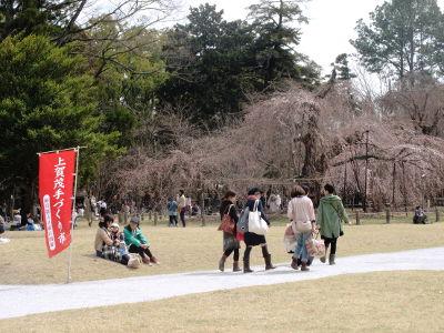 【写真】上賀茂神社の御所桜(枝垂れ桜)、手前に芝生に座る若い女性 2 人と女児、砂利道を歩く若い女性 5 人の後ろ姿。
