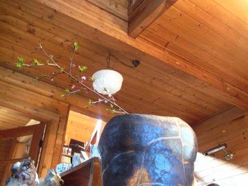 【写真】陶工房 滋風の展示室中央から階段側を望む。手前に、豆桜を一枝生けた Sigeru の壺「復元」。その奥に Sigeru の森の精と風花の猫マグ。