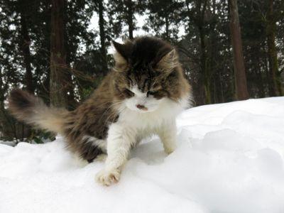「雪中の夢羽」